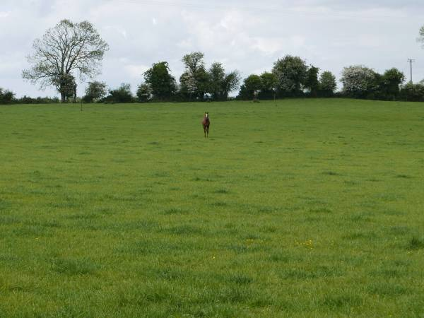 13 Acres of Prime Agricultural Land